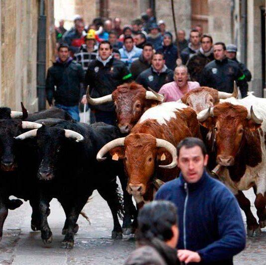 Carnaval de Toro